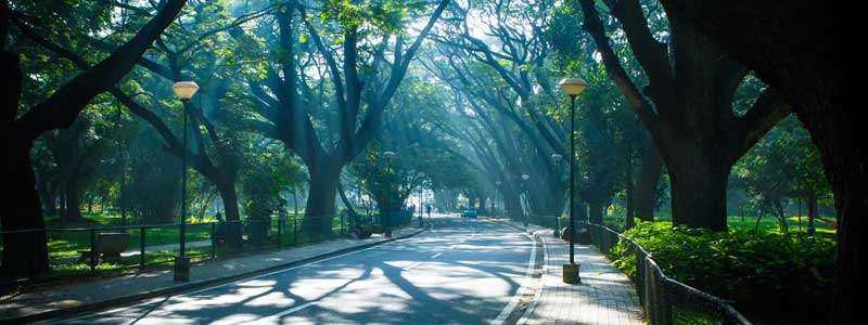 cycling tracks in bangalore: cubbon park